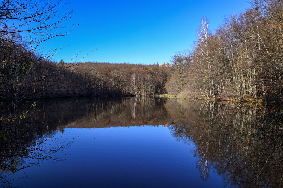 Озеро в лесу - igor G.