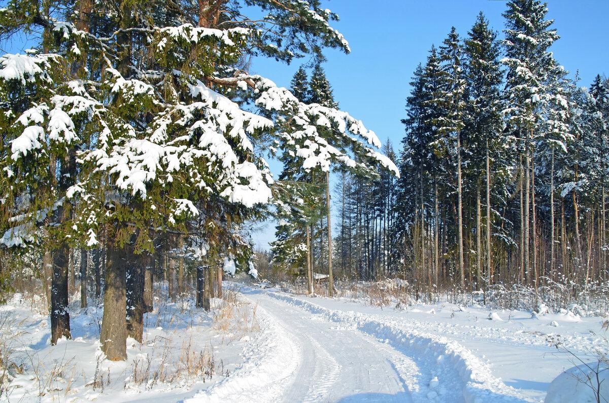 Зимняя дорога - Нина Синица