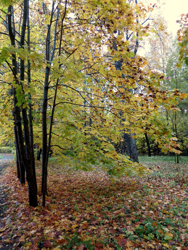 Октябрь - Валентина Жукова