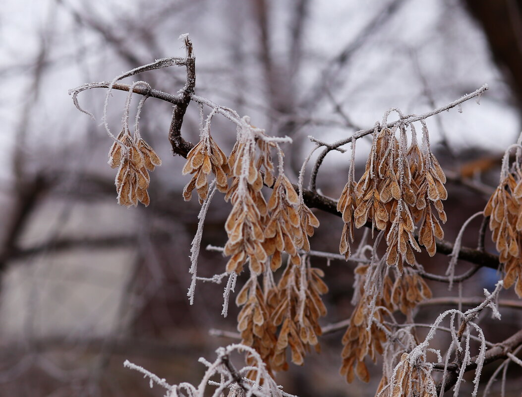 Когда нет снега...ни капельки... - Юрий Гайворонский