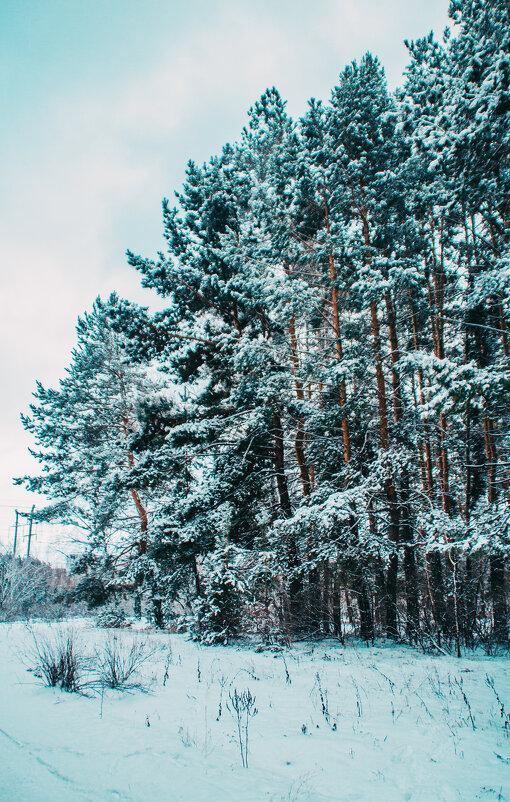 Зимний лес - Сергей Осин