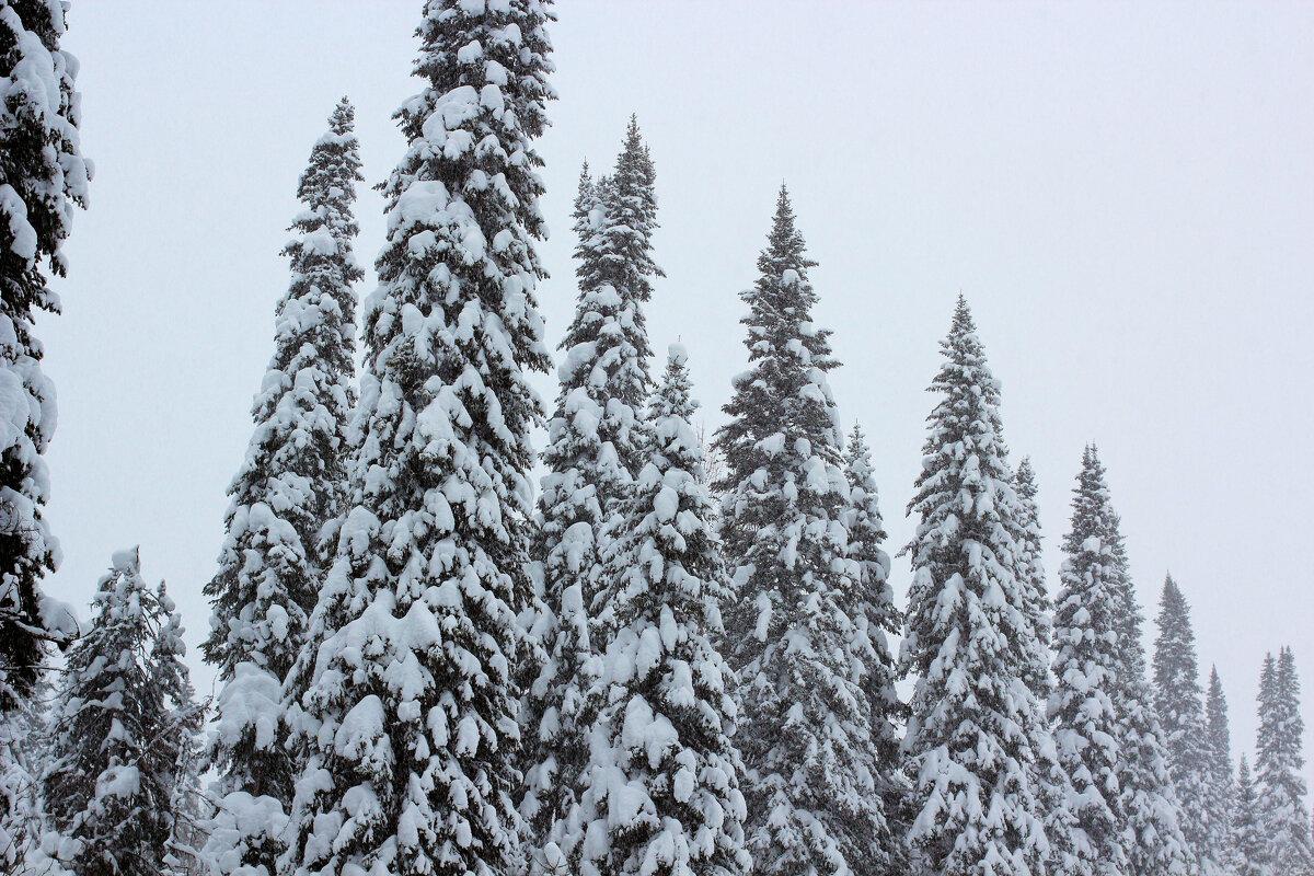 Лесные великаны!!! - Радмир Арсеньев