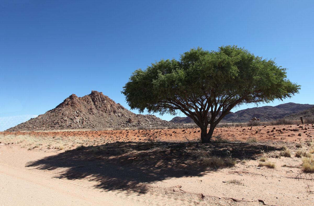 Пустыня Намиб. - Зуев Геннадий