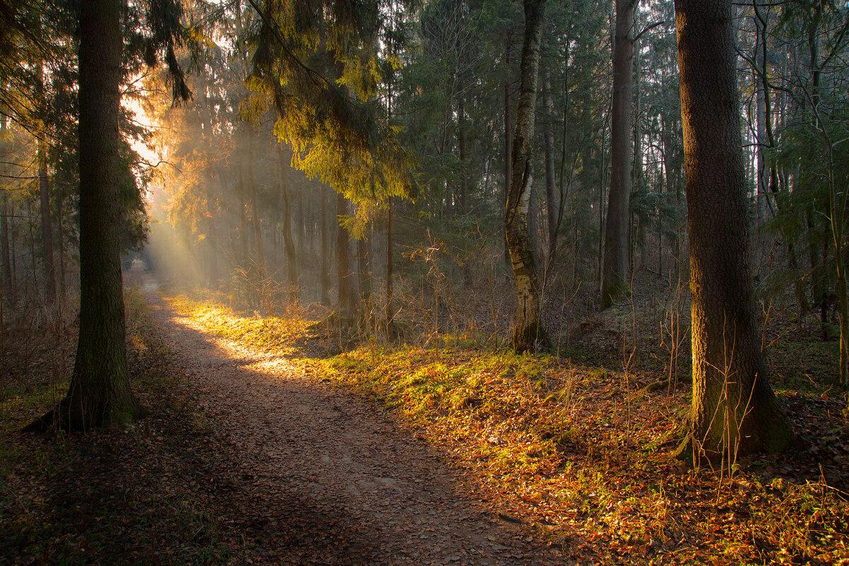 Утро в лесу - Виктор К