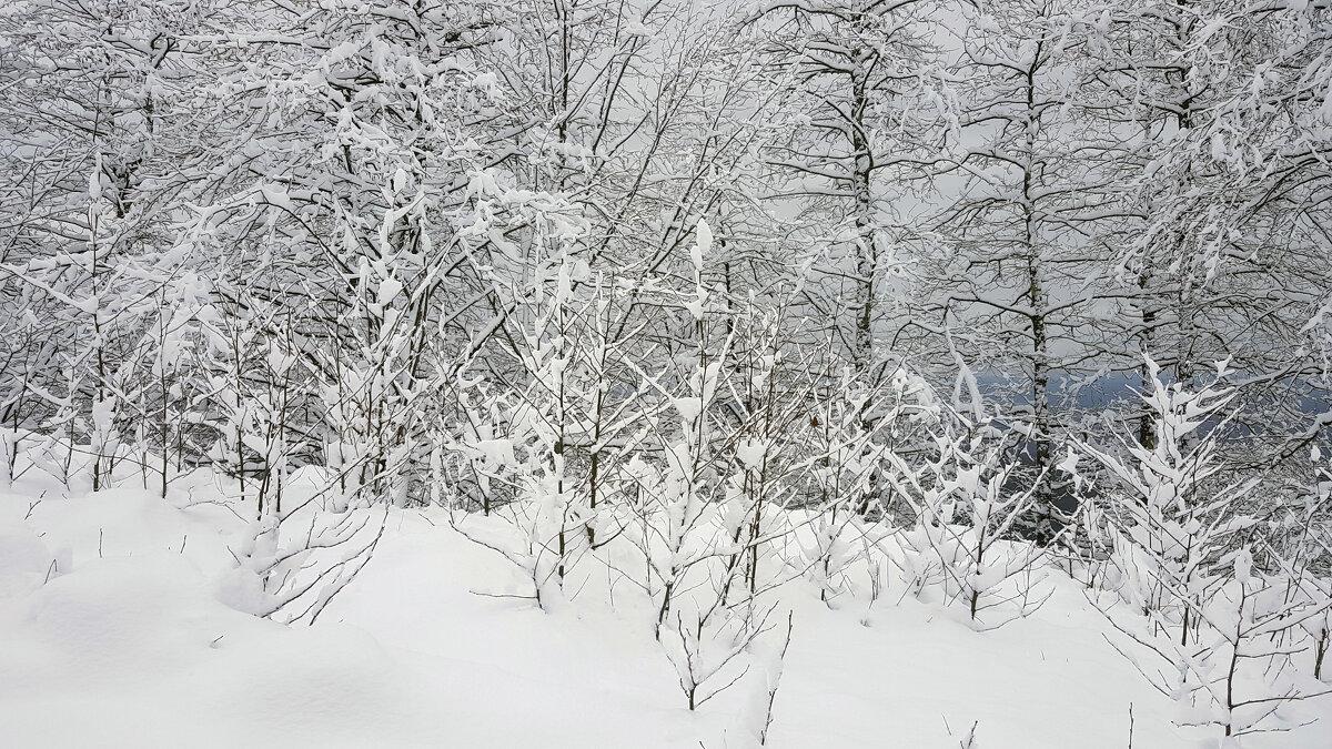 Зимняя зарисовка - Наталья (D.Nat@lia)
