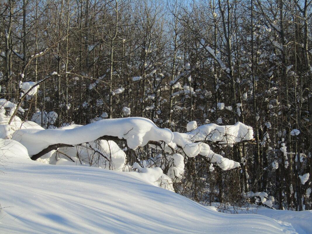 Снежный дракон - Galaelina ***