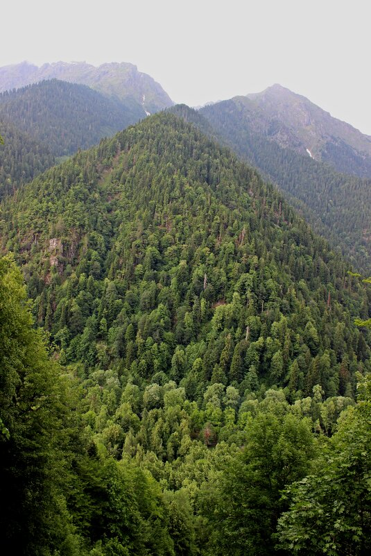 Горы Абхазии - Татьяна Пальчикова