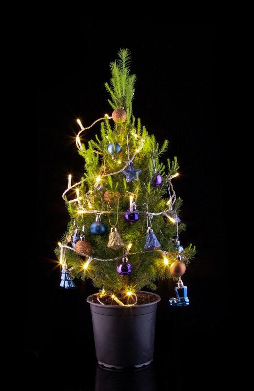 Живая елка после рождества - Nara Nakhshkarian
