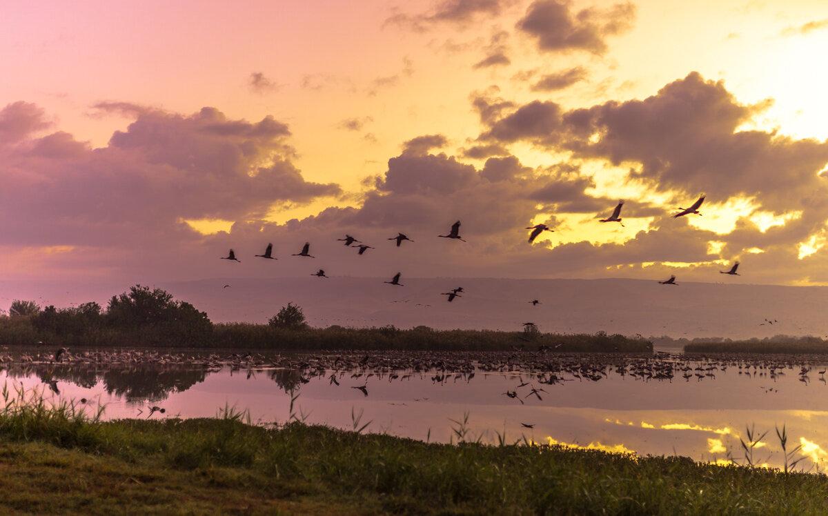 Перед рассветом на озере Хула - Адик Гольдфарб