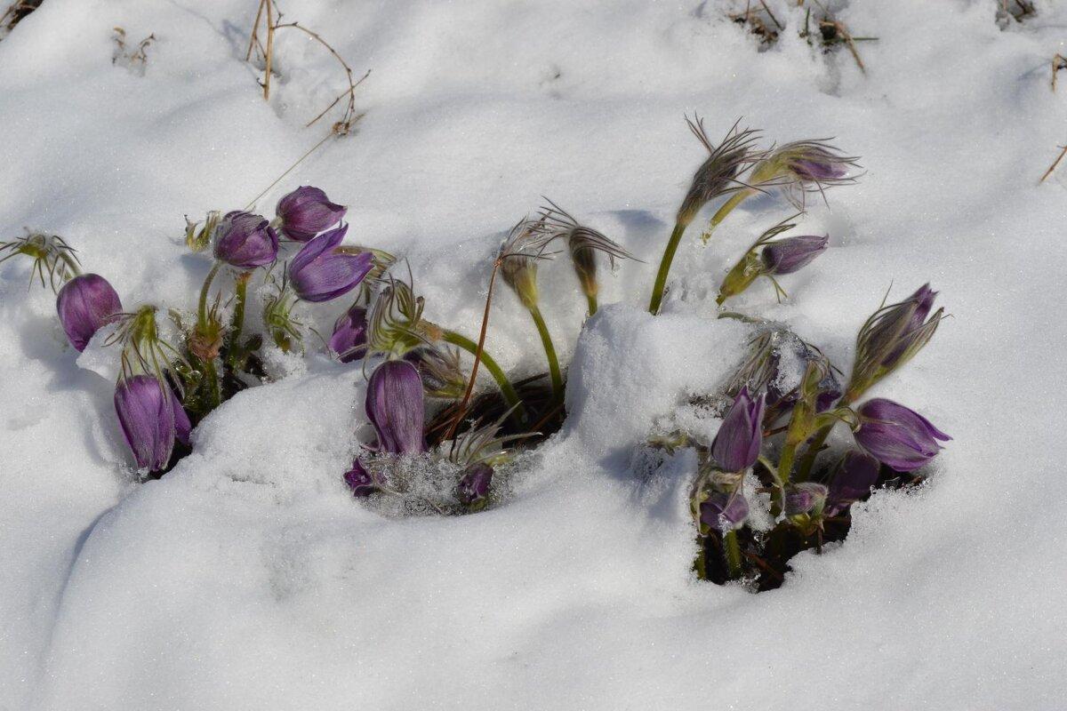 Весна,придет... - Хлопонин Андрей Хлопонин Андрей