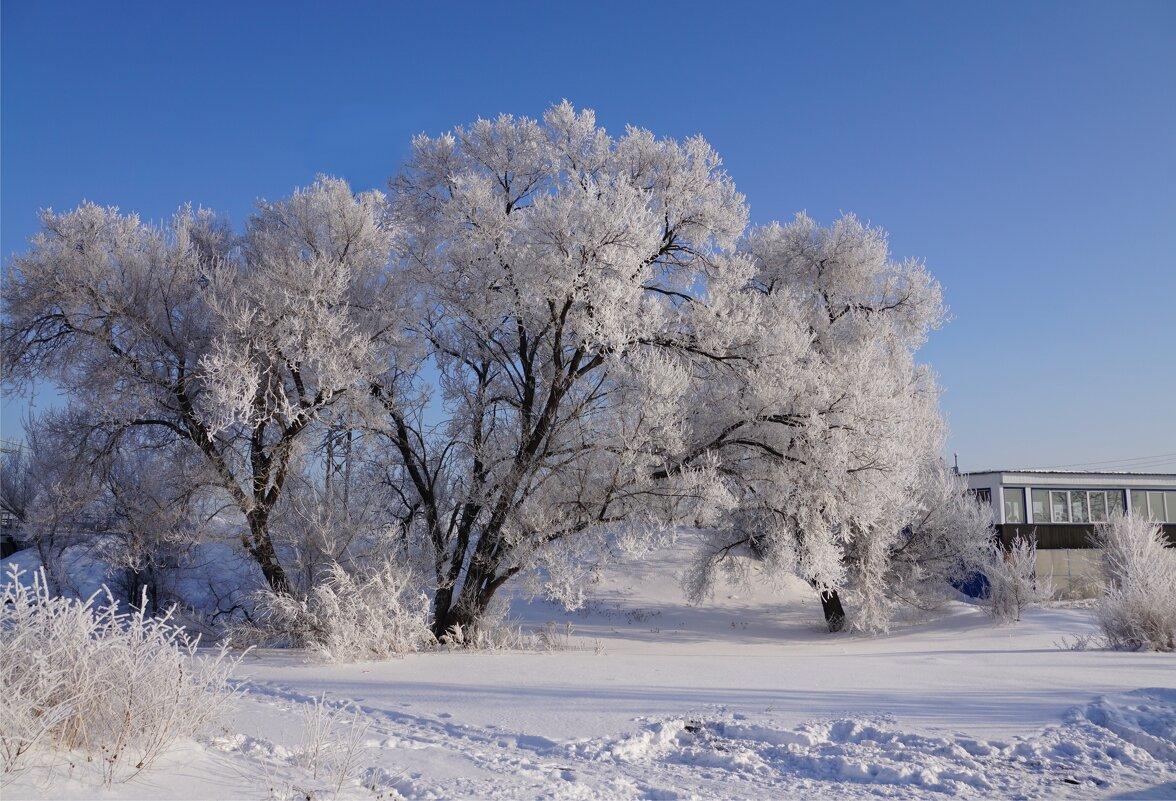 Дерево около кафе - Наталия Григорьева