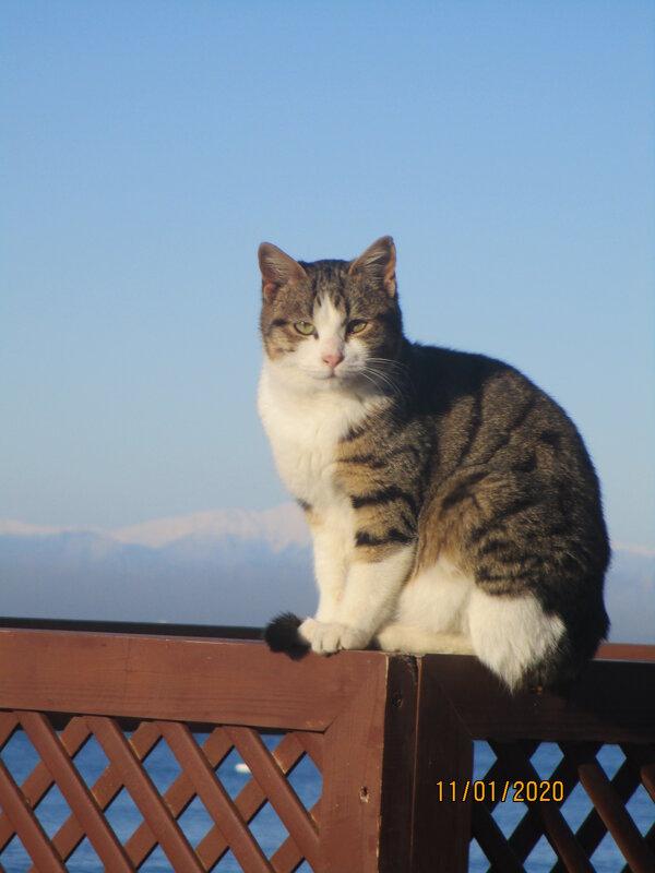 Кошка из города Сиде,турция. - Зинаида