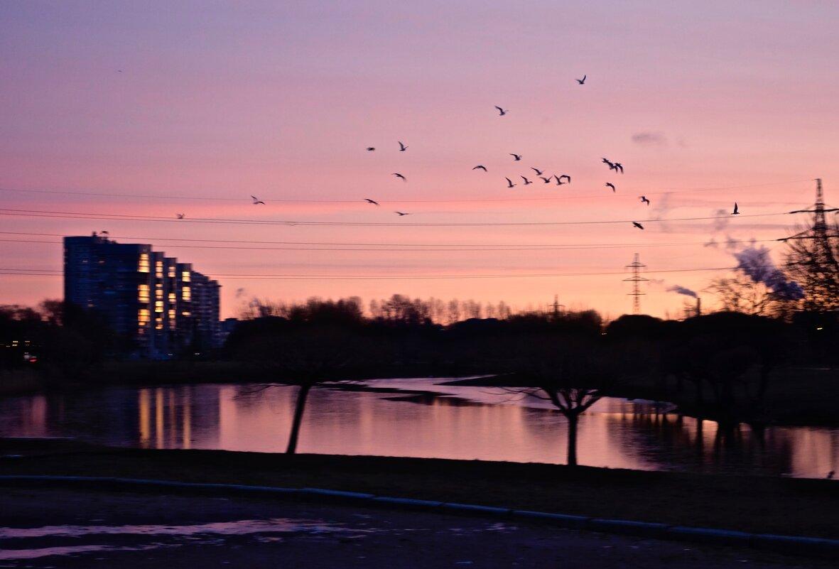 птицы на рассвете - Елена