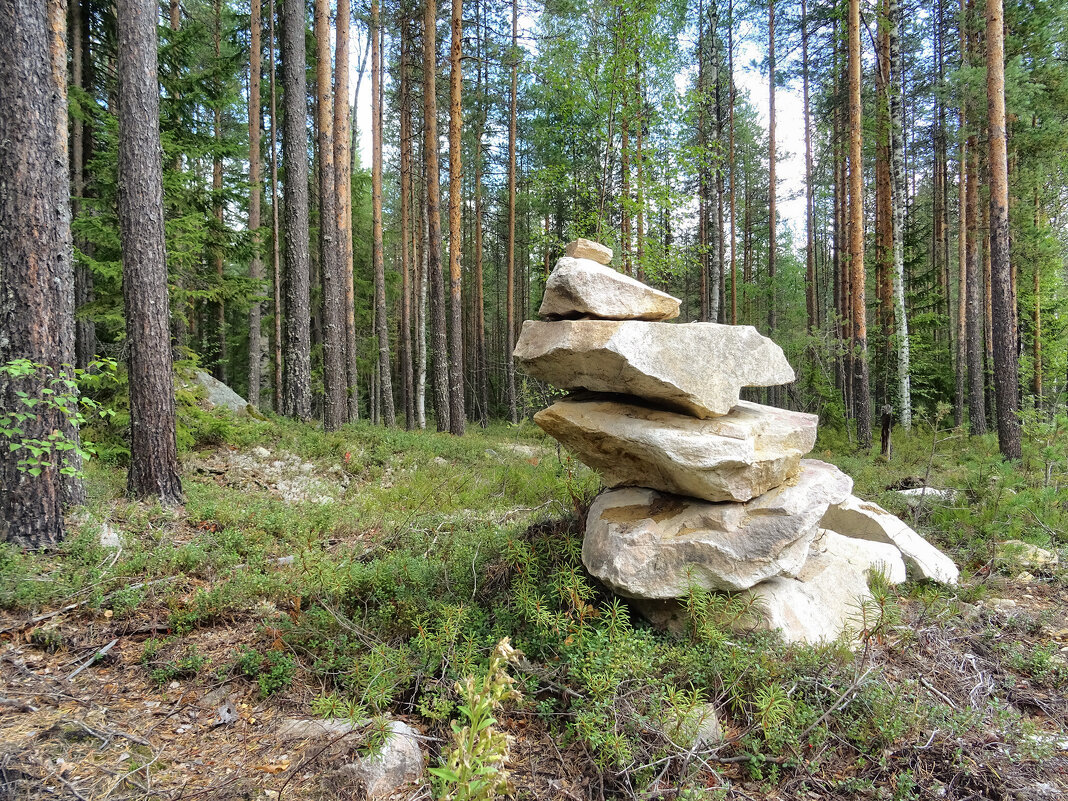 Северный лес - Денис Бочкарёв