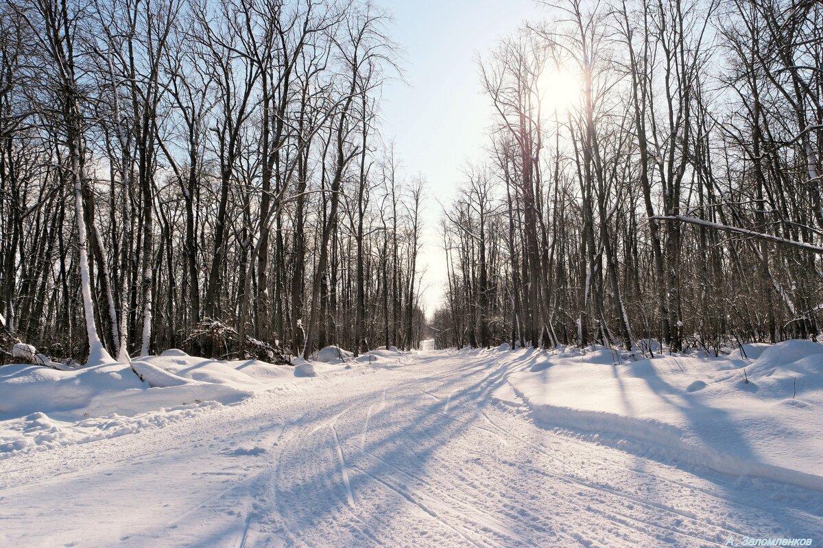 На лесных прогулках в феврале.. - Андрей Заломленков
