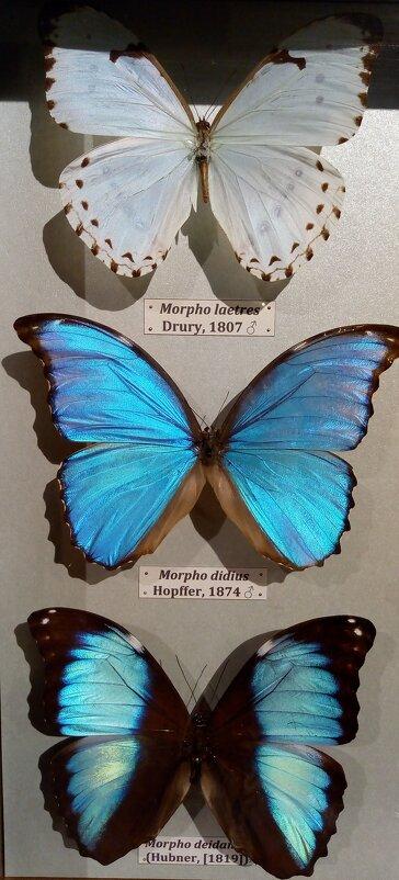 Бабочки - Татьяна Пальчикова