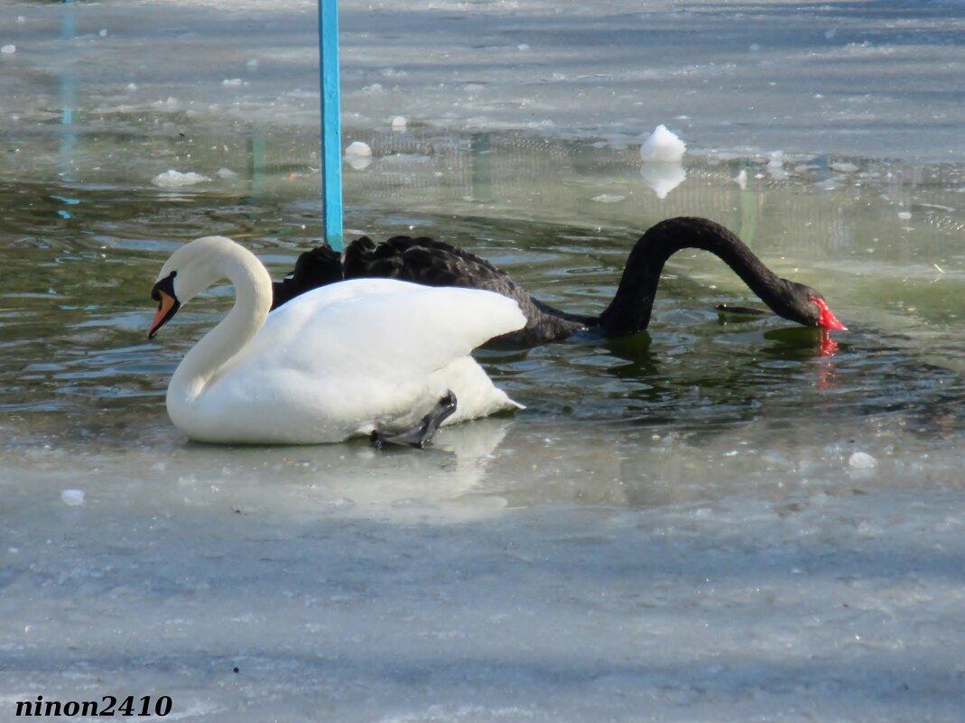 На птичьей площадке в городском парке - Нина Бутко