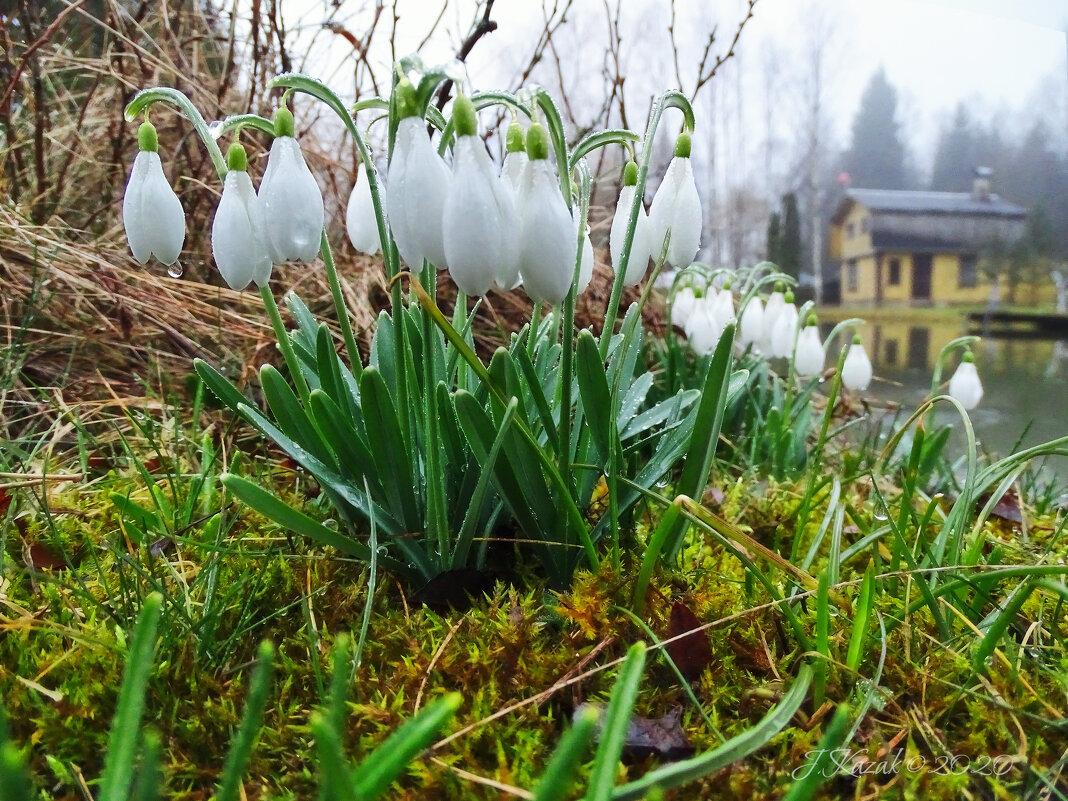 Пришла весна в деревню. - Елена Kазак