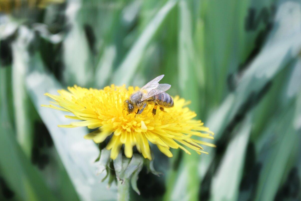 Пчела - Яна Калтурова