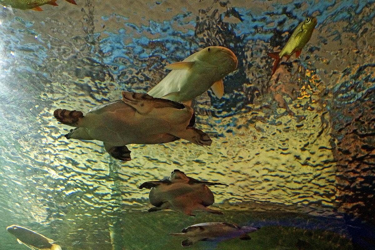 Проходя под аквариумом... - Alex