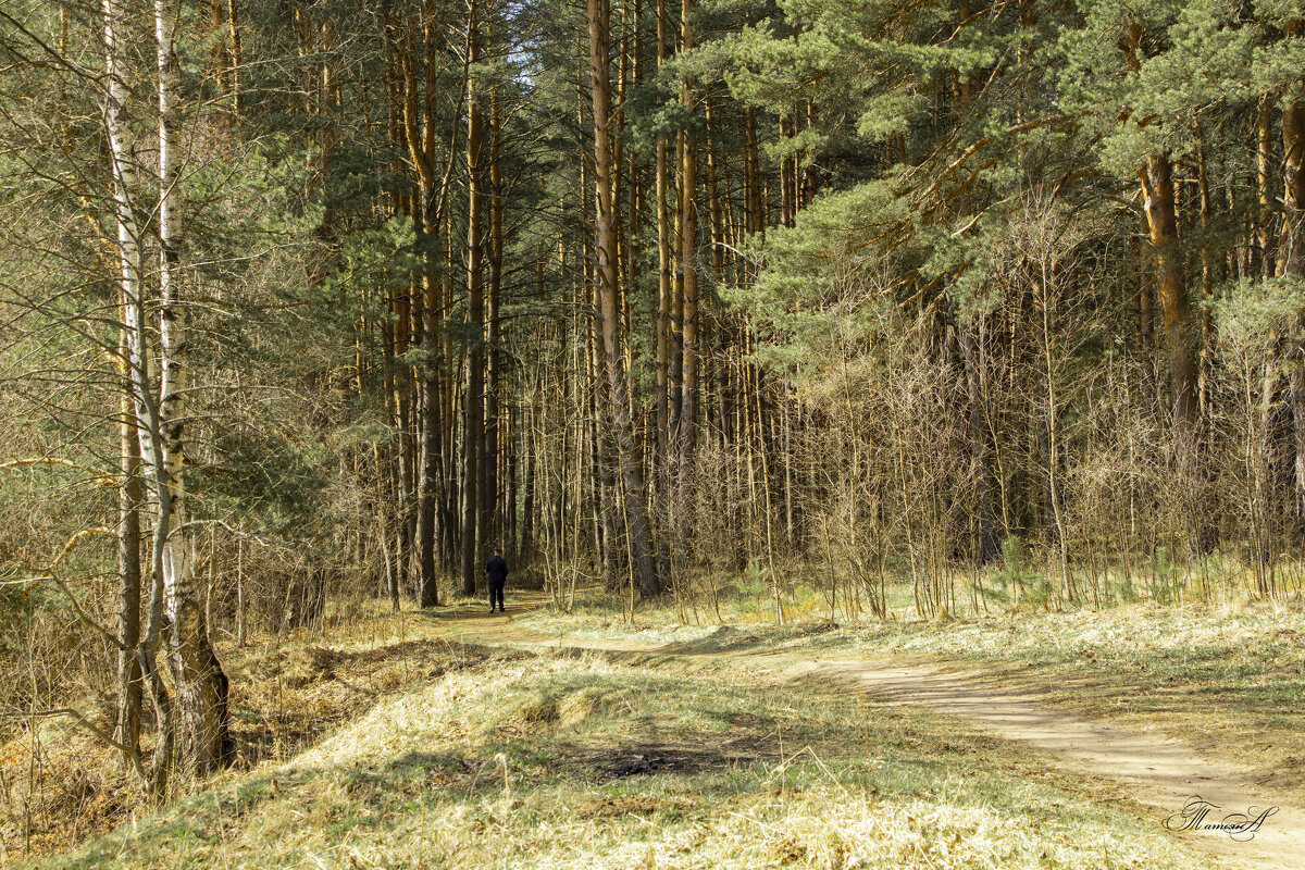 В лесу. - ТатьянА А...