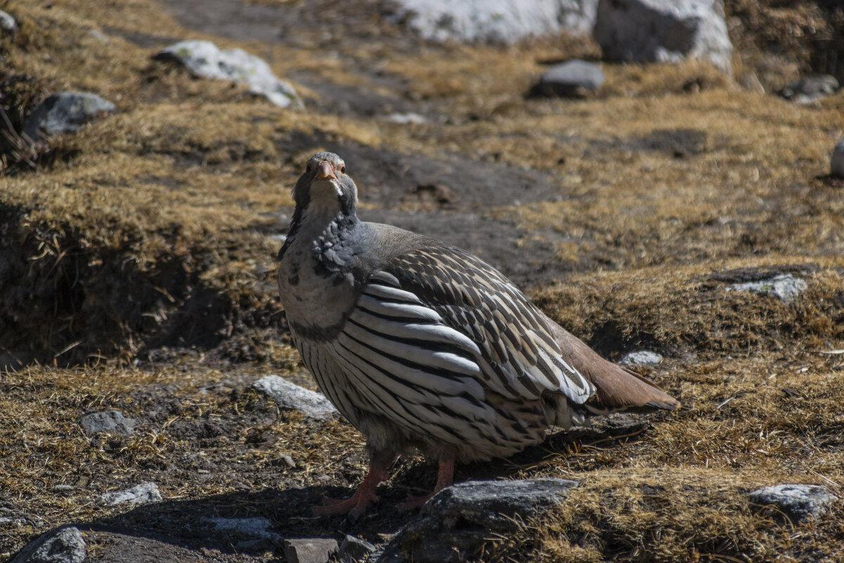 Важная птица - Александр Россихин