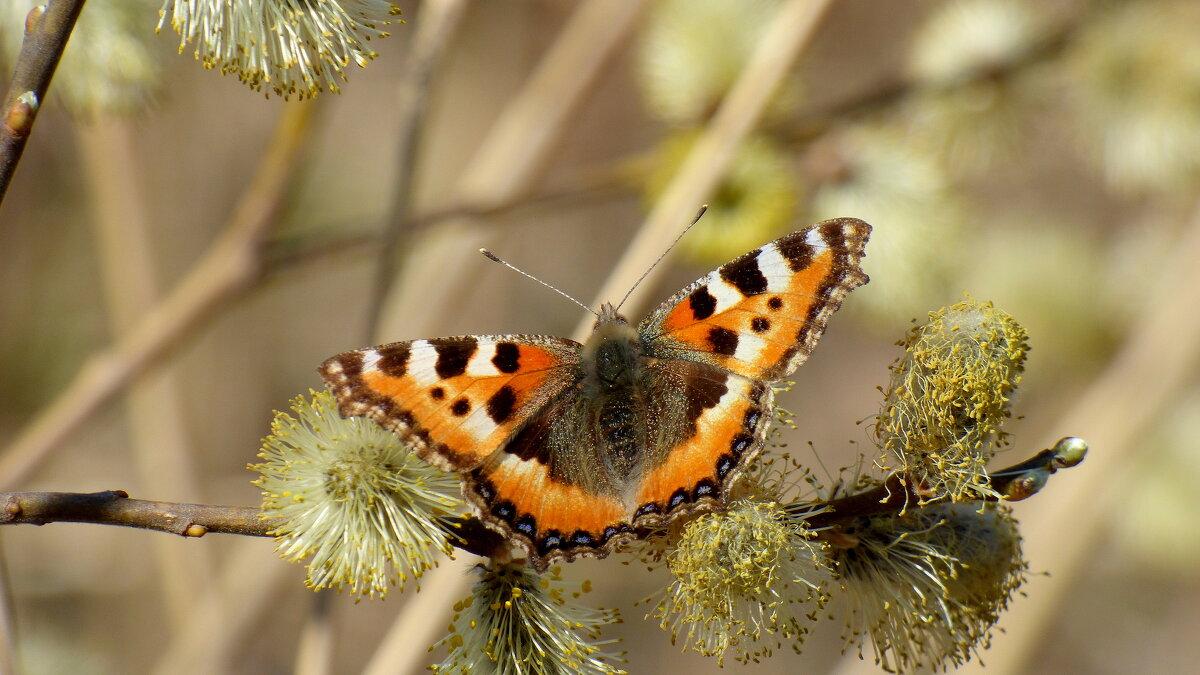 и опять про бабочек..16 - Александр Прокудин