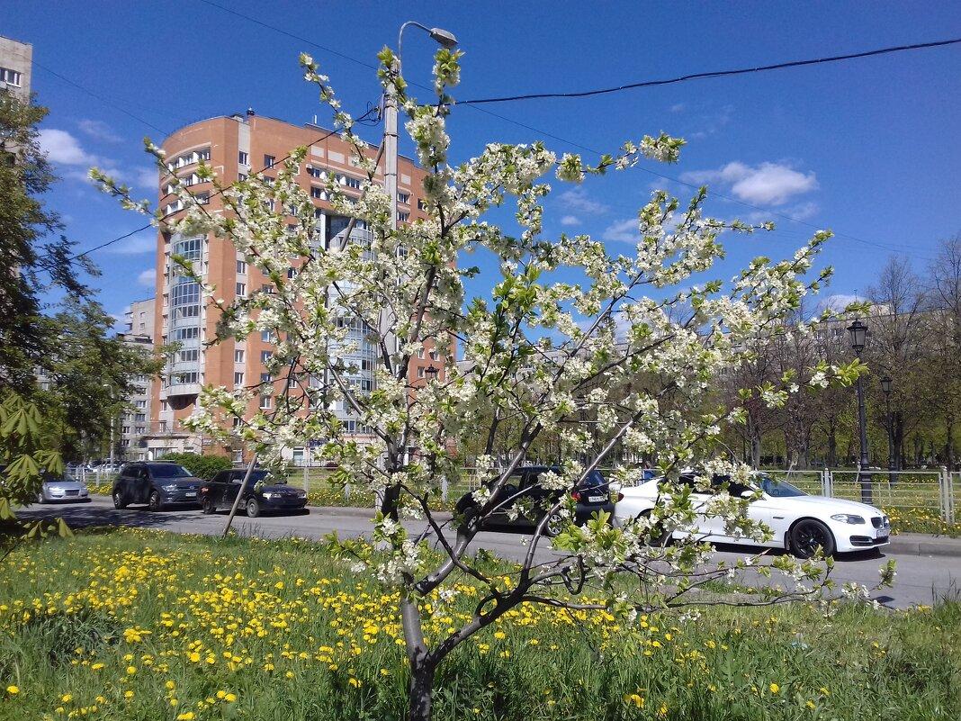 Весна - Сапсан