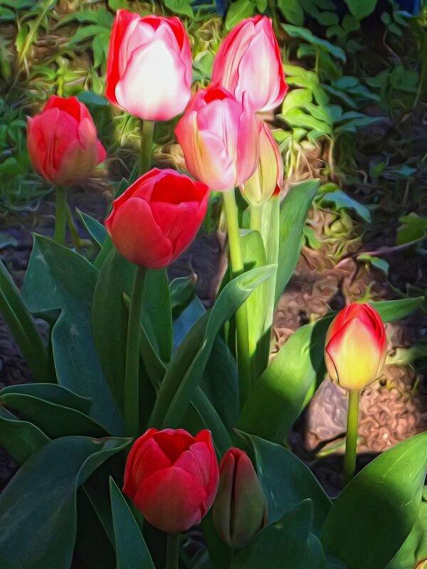 Долго расцветали.. - Фотогруппа Весна-Вера,Саша,Натан