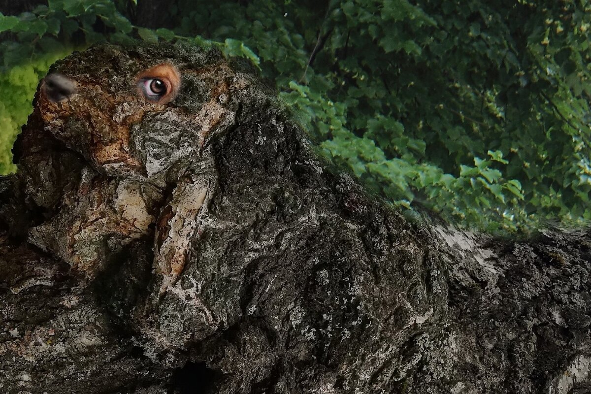 Кого только не встретишь на  деревьях. - Елена Миронова