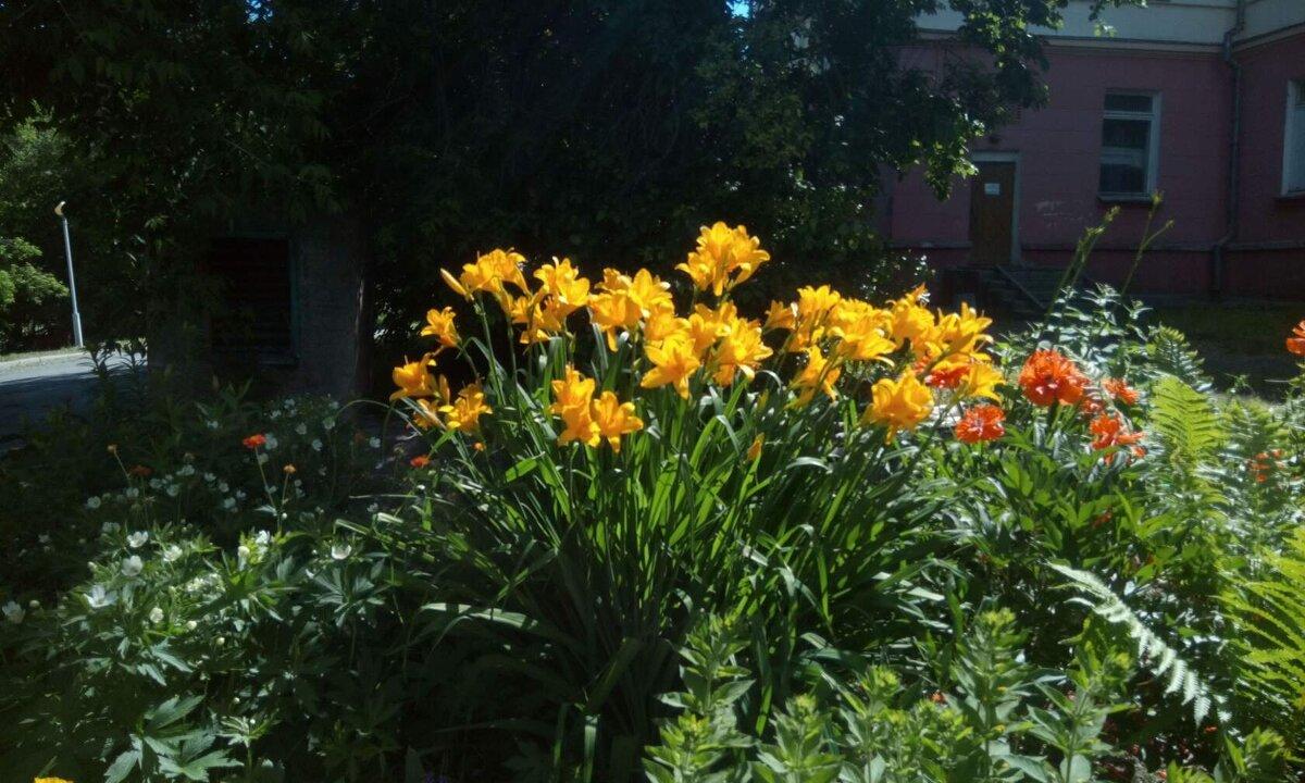 Желтые цветы - Иван Семин