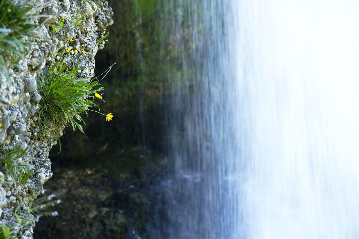 Цветочек и водопад - Walter Dyck