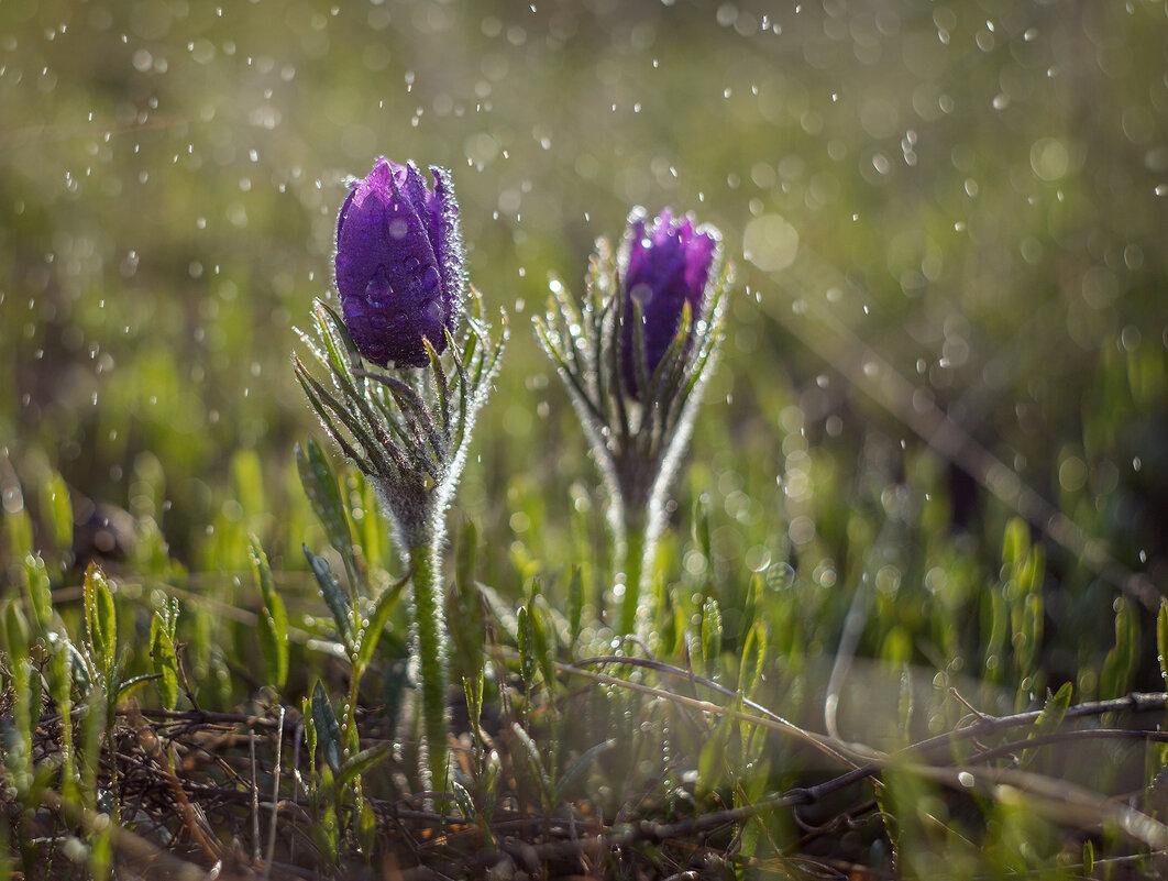 Рождение весны - Татьяна Курамшина