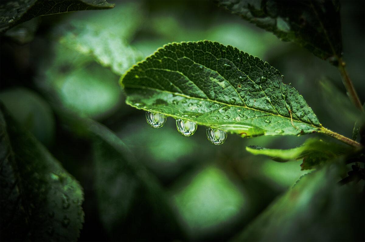 макруха в моей вотчине Ромашково...после дождя - Юрий Яньков