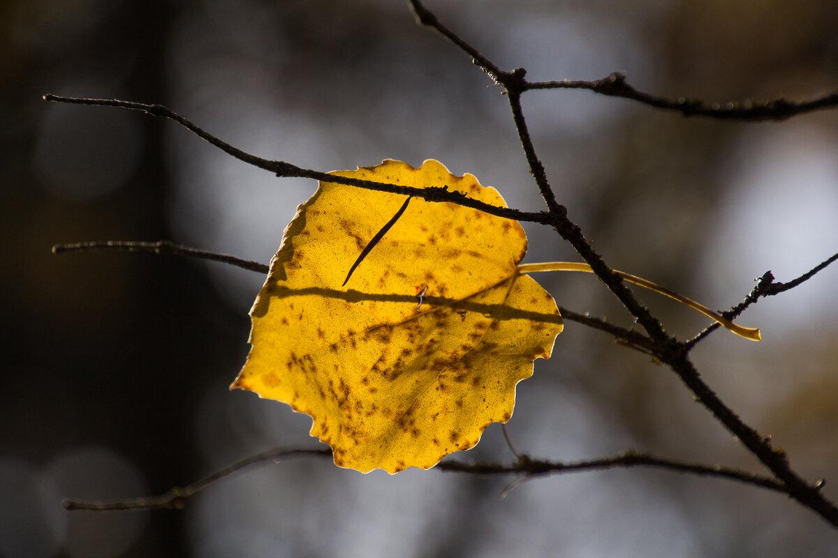 Этот в жёлтом, одинокий... - Petr Kamesheck