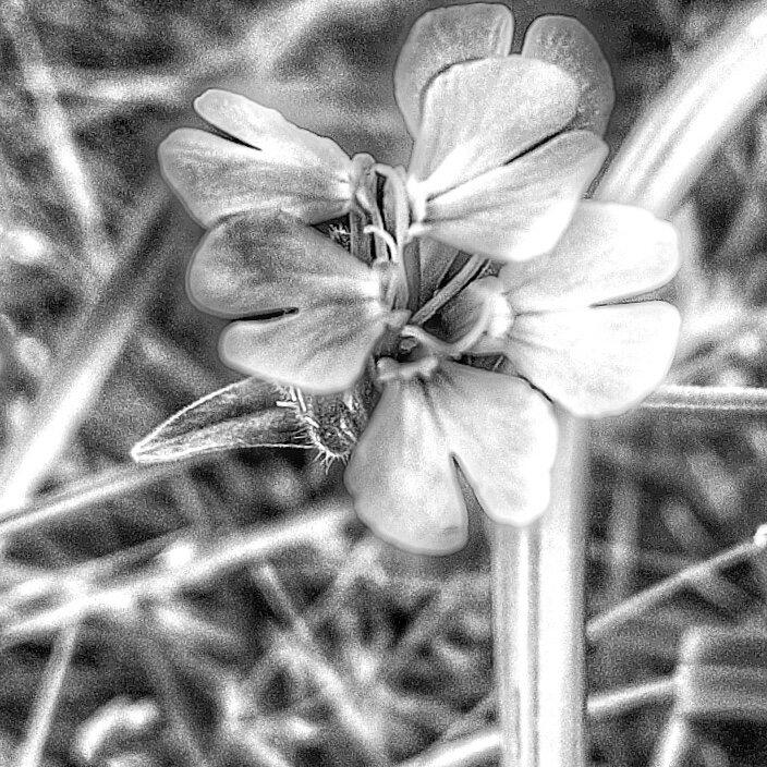 Цветок - Руслан