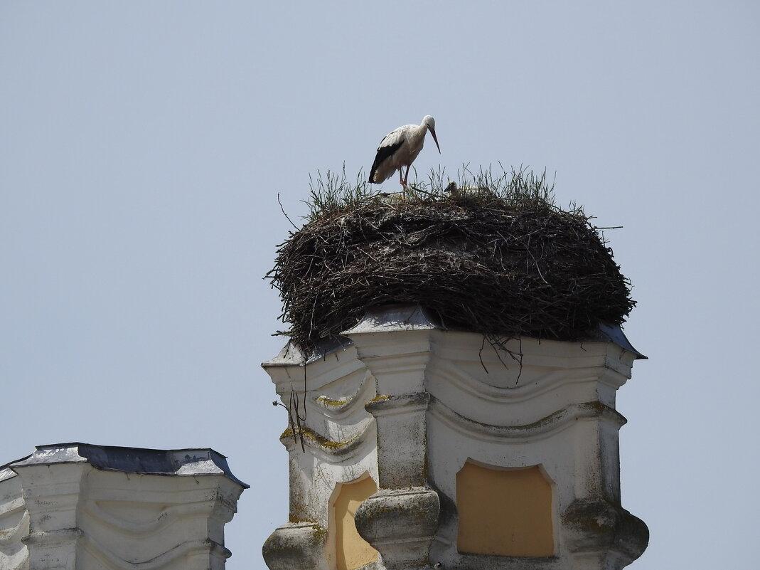 гнездо - ИННА POROHOVA