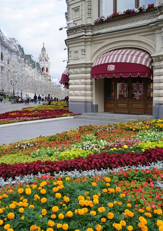 Городские цветы - Ольга
