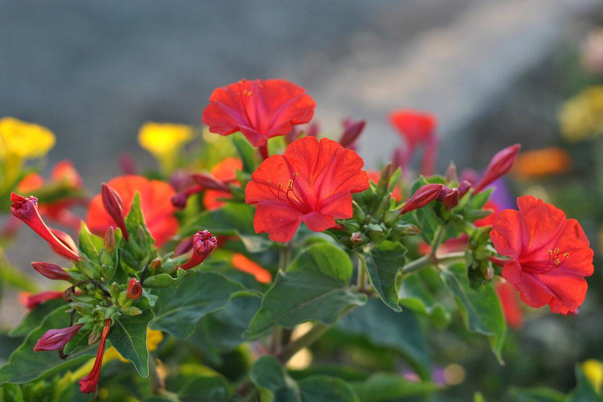 Яркие краски лета - Любовь Р