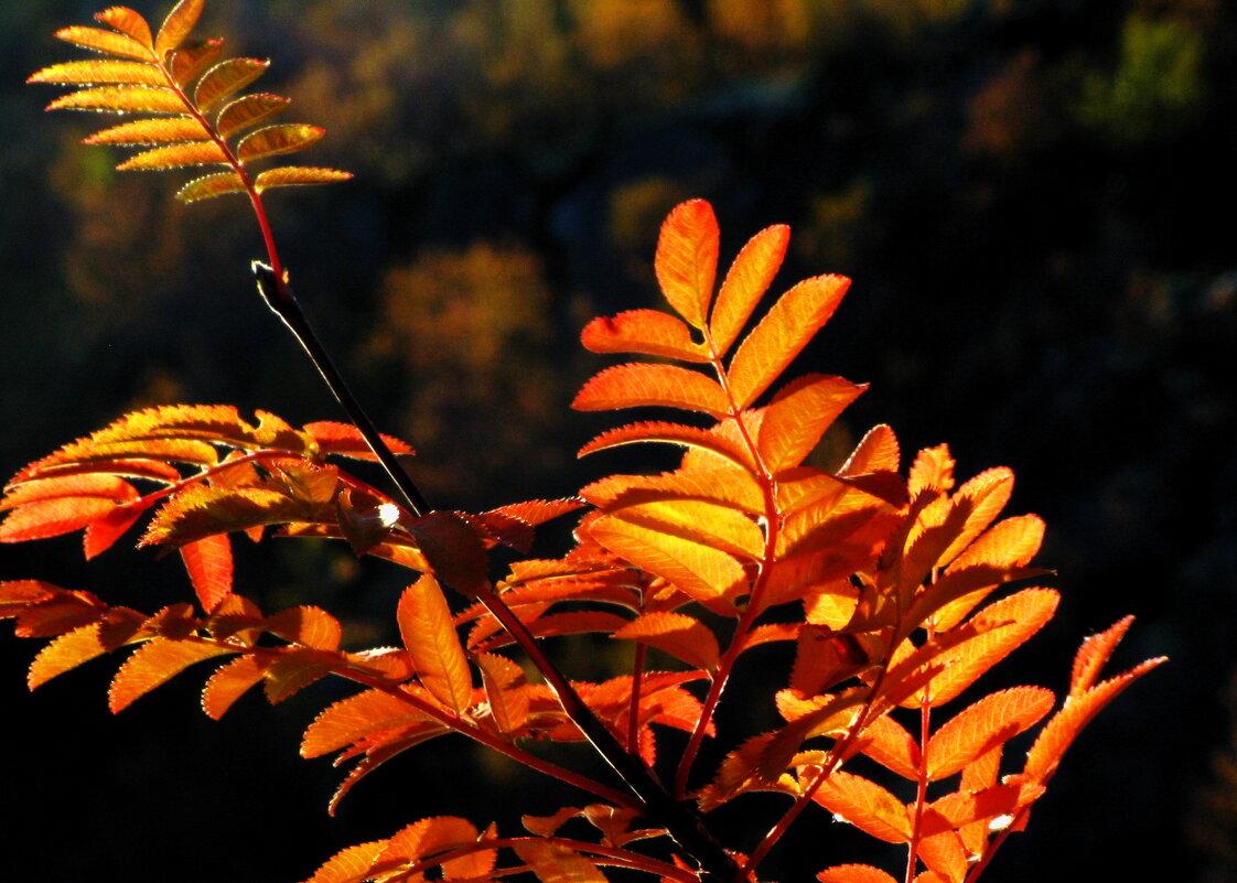 Осень на закате дня. - игорь кио