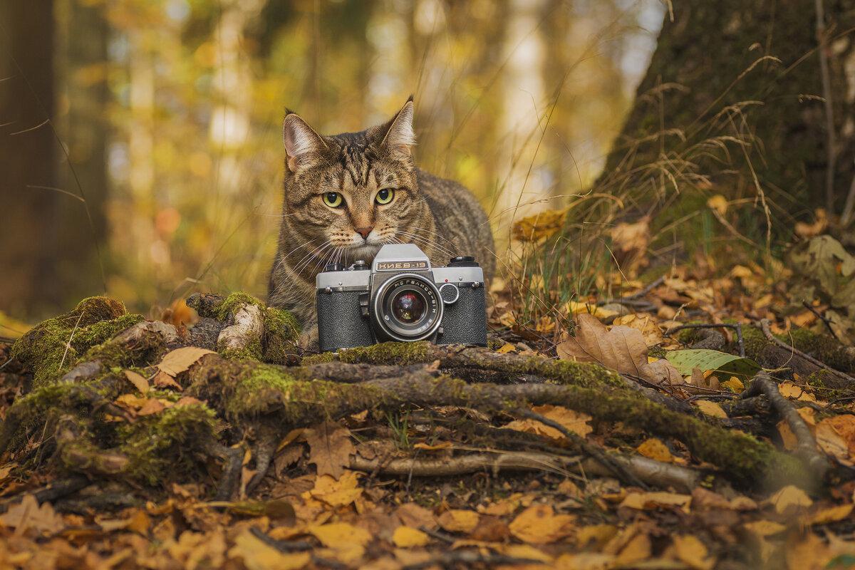 Пушистый фотограф - Максим Вышарь