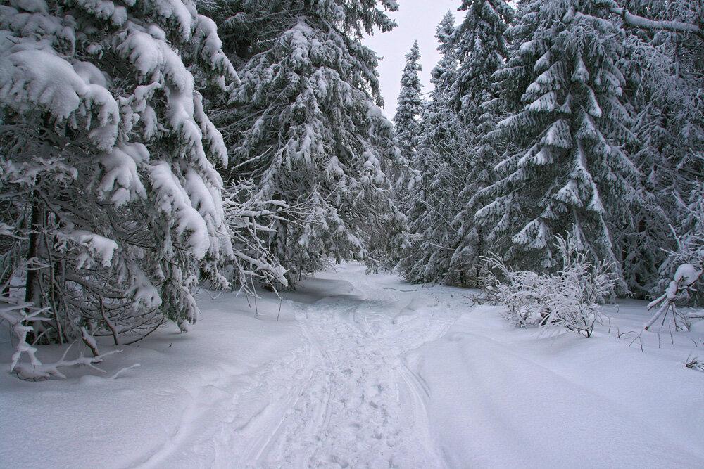 Прогулки по зимнему лесу - Галина Ильясова