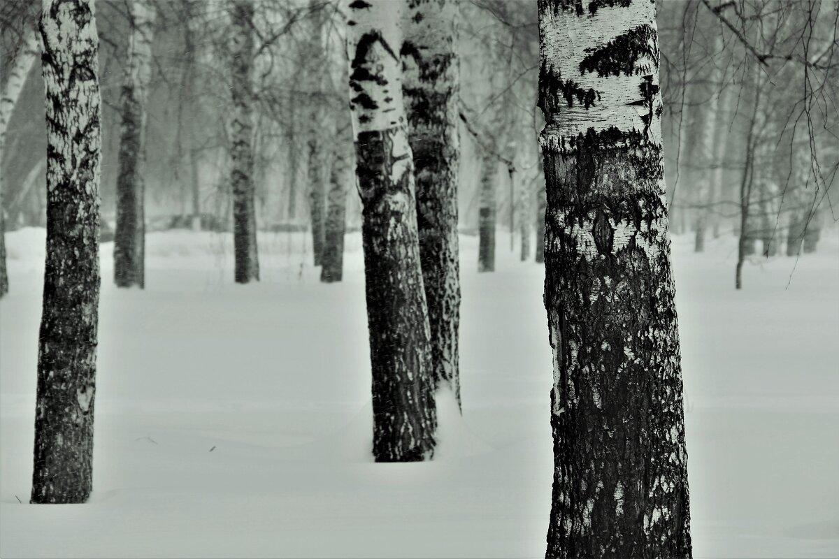 Снег в городе. - Венера Чуйкова