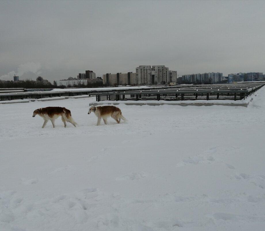 Зимой 2021 на прогулке - Митя Дмитрий Митя