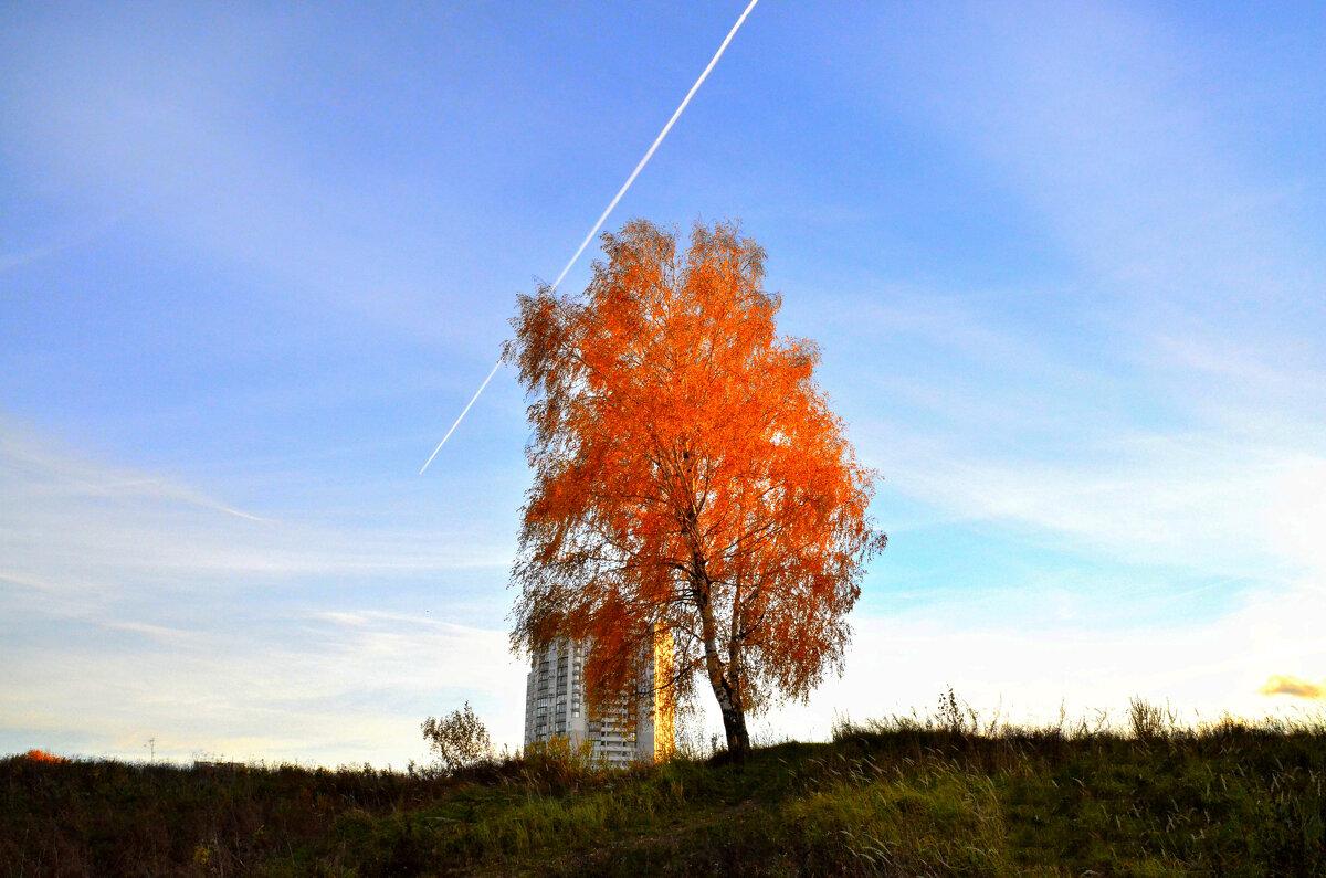 Деревце. - Валерий Пославский