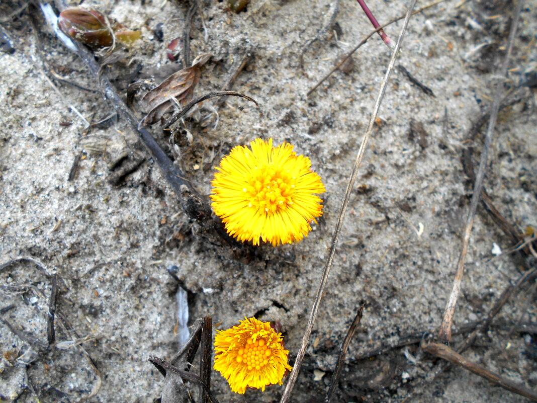 Первые цветы - Игорь Чуев