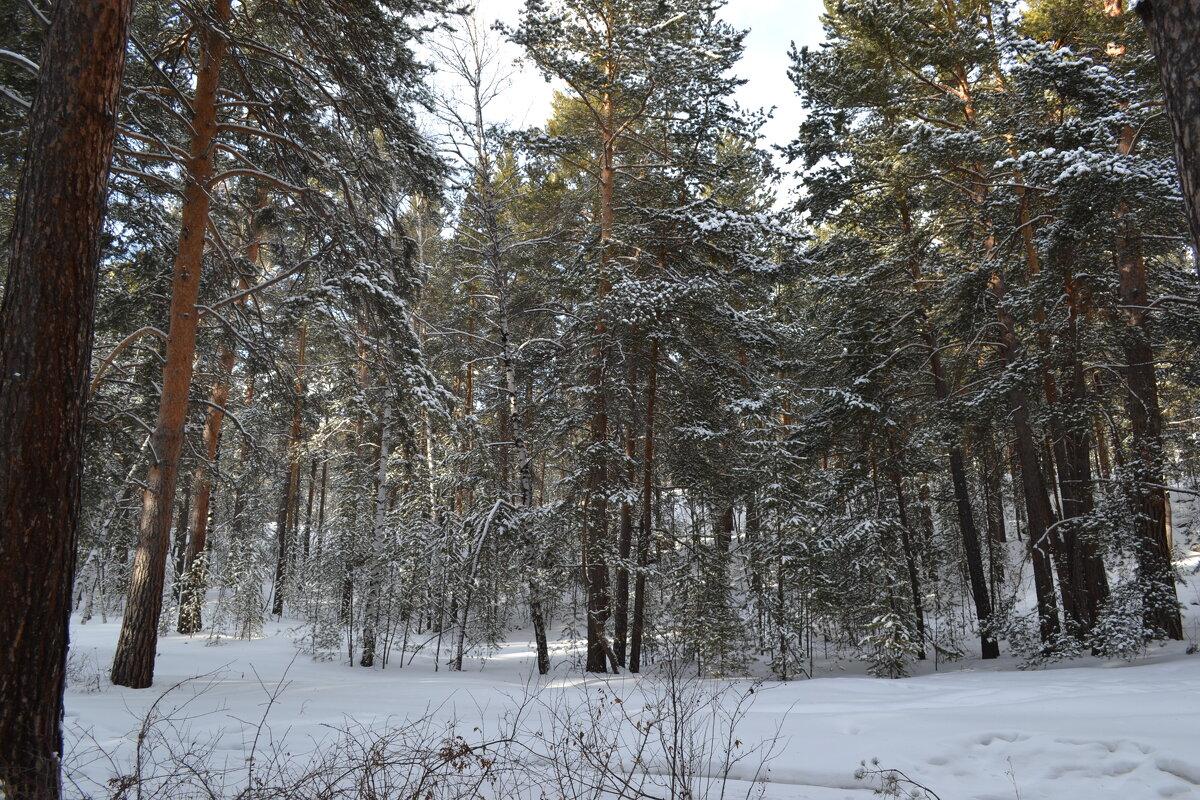 Зимние  Каркаралинские леса... - Андрей Хлопонин
