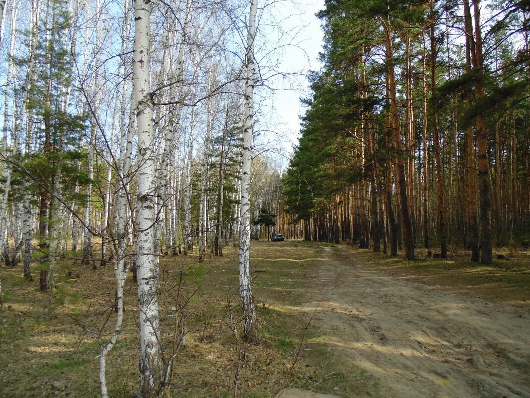 Смешанный лес . Май . - Мила Бовкун