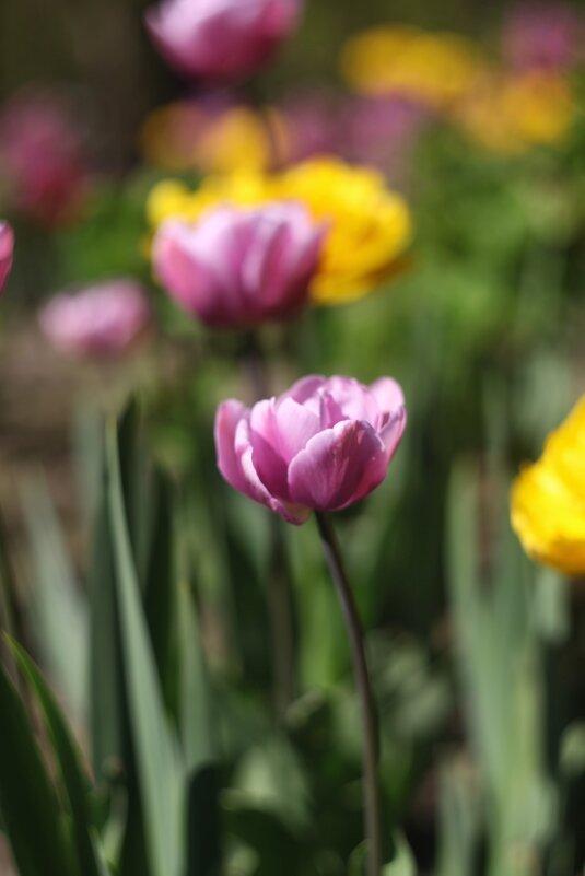 Весенние цветы - Наташа С