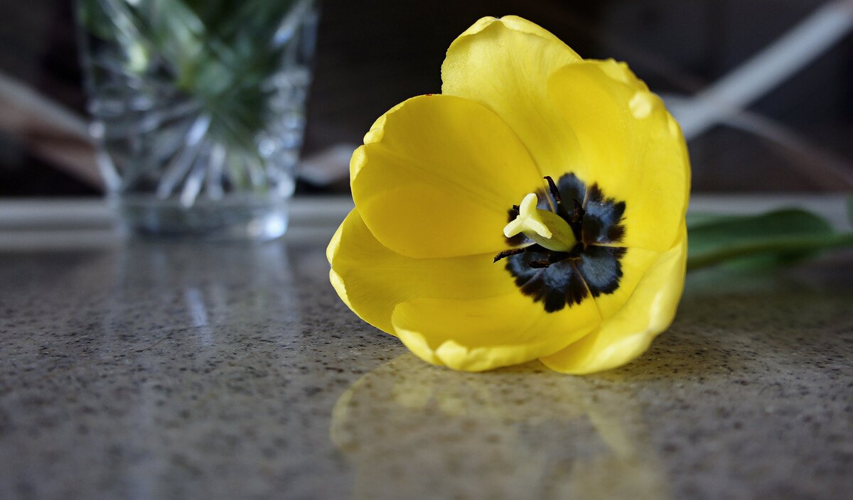 Майский тюльпан - Зинаида Каширина